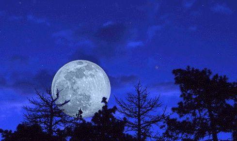 sharat Moon