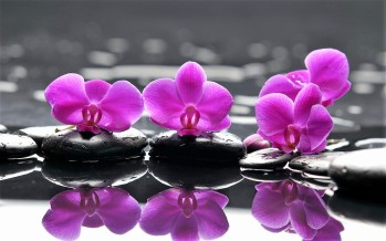 Zen-Purple-Flower-with-Black-Stone