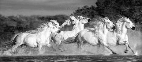 a_herd_of_white_horses_ga (1).jpg
