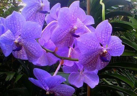 flower-violet