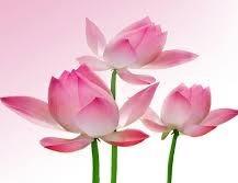 kitus flowers.jpeg