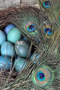 peacock-eggs-blue